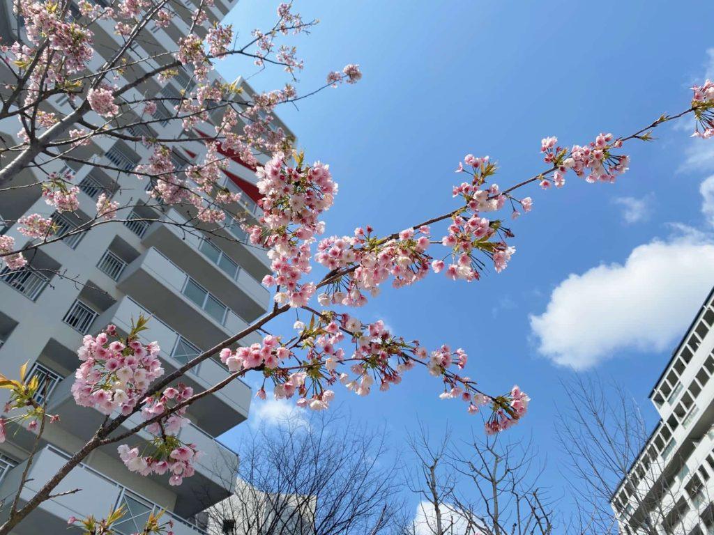 六甲アイランド 桜 2020 六アイ ウエストコート6番街 ウエスト6 W6