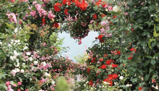 【神戸・六甲アイランドのバラ園】RICローズガーデン|5月中旬が見頃!場所・アクセス・周辺情報