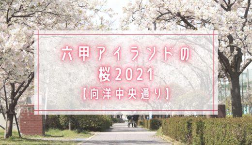 【六甲アイランドの桜2021】向洋中央通り|オオシマザクラ(大島桜)ほか